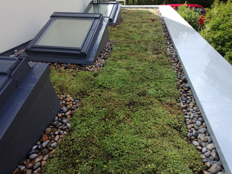 Finished sedum roof